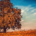 7 Things to Consider When Planning a Fall Cleanup