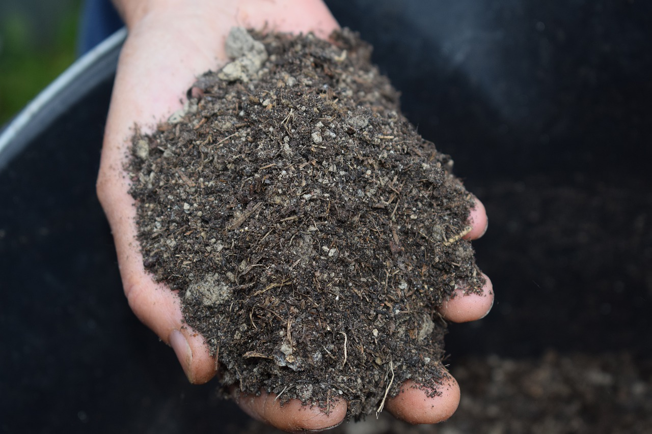 4 Things You Need to Know about Mulch