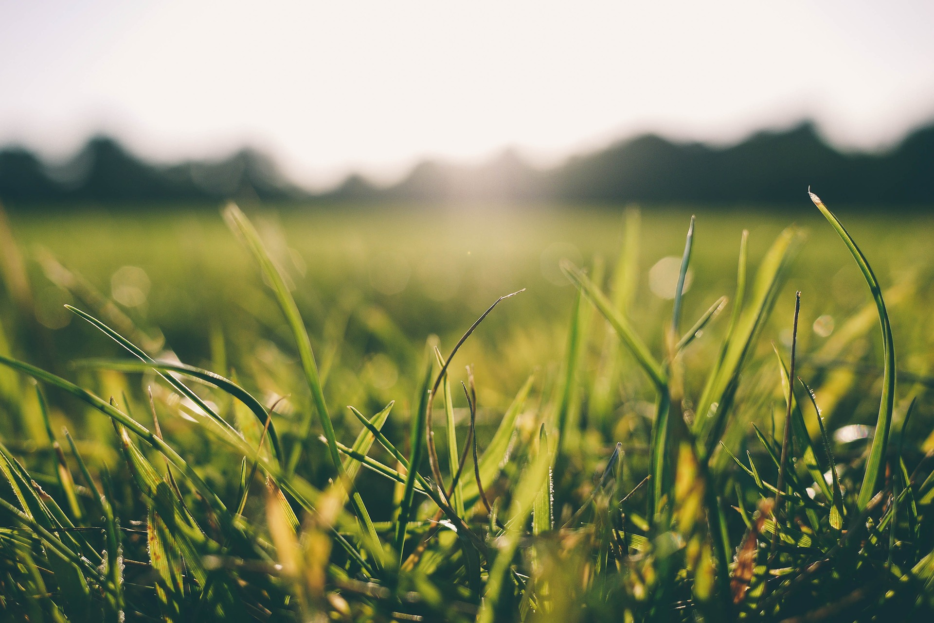 How to Keep Your Lawn Healthy and Happy This Summer